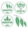 Eucalyptus vector image vector image