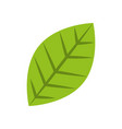 green leaf natural foliage icon vector image vector image