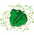 leaf lettuce vector image vector image