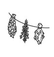 dried herbs ornament flat style vector image