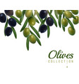 realistic olives background vector image vector image