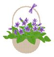 violets in basket vector image