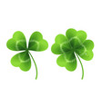 four leaf clover isolated on white vector image