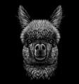 alpaca llama portrait graphic portrait vector image