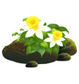daffodil flowers and rocks on white background vector image vector image
