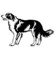 decorative standing portrait of dog border collie vector image vector image