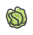 green cabbage vegetable icon cartoon vector image