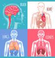human internal organs design concept vector image vector image