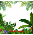 Tropical jungle on white background