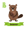 Beaver B letter Cute children animal alphabet in vector image vector image