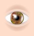 human eye visual examination body check vector image vector image