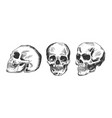 human skull in different position vector image