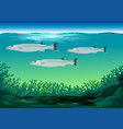 three fish swimming under the sea vector image vector image