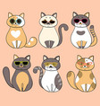 trendy serious cats with sunglasses vector image vector image