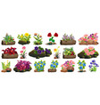 large set colorful flowers on rocks and wood vector image