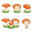 mushrooms slippery jacks vegetable healthy food vector image vector image
