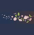 pink sakura flowers with leaves on blooming branch vector image