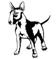 decorative standing portrait of dog bull terrier vector image vector image