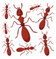 group of ants on white background vector image vector image
