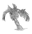 hand drawn coconut palm tree vector image vector image