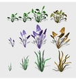 Fancy different plants and grass big set vector image vector image