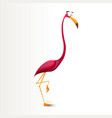 funny crazy cartoon flamingo characters vector image
