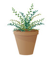 spider plant with pot vector image