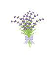 bouquet of lavender vector image