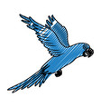 exotic parrot isolated icon vector image
