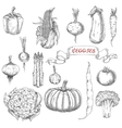Farm vegetables sketches for food design vector image vector image