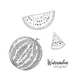 hand drawn of watermelon isolated on vector image