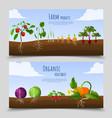 healthy food horizontal banners vector image vector image