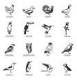 Bird Silhouette Set vector image