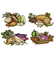 fresh farm vegetables and exotic beans sketches vector image vector image
