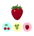 Fruit Icons Strawberry Gooseberry Cherry vector image vector image