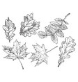 hand drawing leaves 1 vector image vector image
