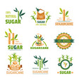 sugarcane natural product sweet condiment of plant vector image vector image