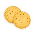 two delicious round biscuit vector image vector image