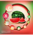 watermelon vitamin infographic vector image vector image