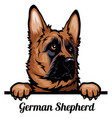 head german shepherd dog - dog breed color image vector image vector image
