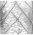 leaf background vector image vector image