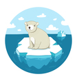 polar bear on ice vector image