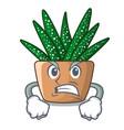 angry cartoon zebra cactus blooming in garden vector image vector image