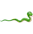 green snake on white background vector image vector image
