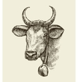 Hand drawn cow bull Sketch a farm animal vector image vector image