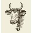 Hand drawn cow bull Sketch a farm animal vector image