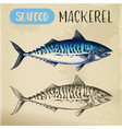mackerel hand drawn signboard for fish store vector image vector image