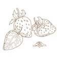 outline hand drawn strawberry flat style thin line vector image