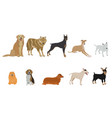 set of dog breeds on white background vector image