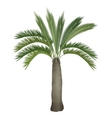 tropical exotic high detailed palm tree vector image vector image
